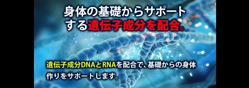 マッスルエレメンツHMB遺伝子成分